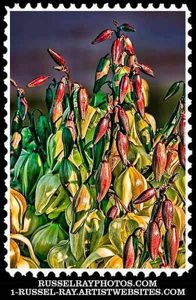 img_0292 yucca stamp