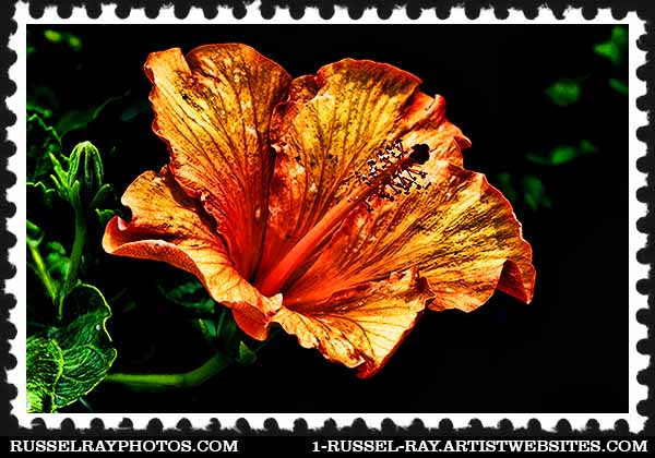 img_1596 hibiscus stamp
