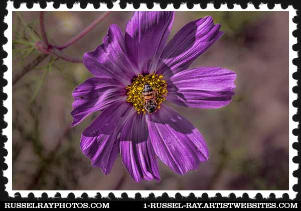 IMG_1611 flower and bee faa stamp