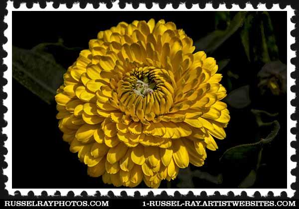 img_1619 stamp