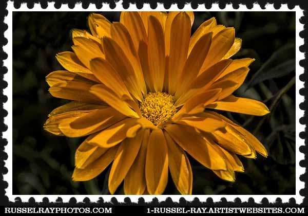 img_1621 stamp