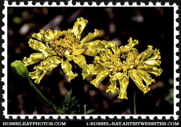 img_1628 flower stamp