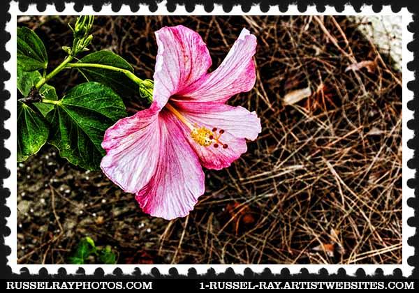 img_1633 hibiscus stamp