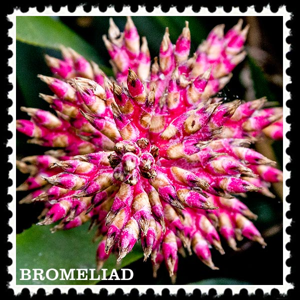 img_1865 bromeliad stamp