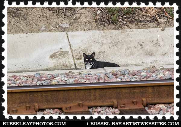 Cat by the railroad tracks