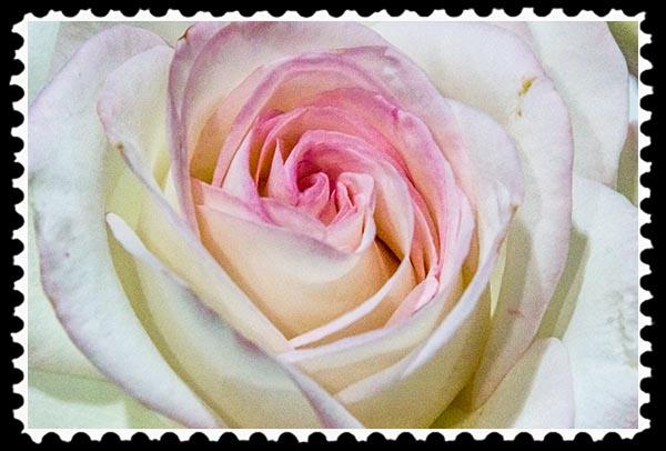 img_6739 stamp