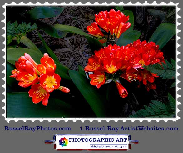 Friday Flower Fiesta by Russel Ray Photos