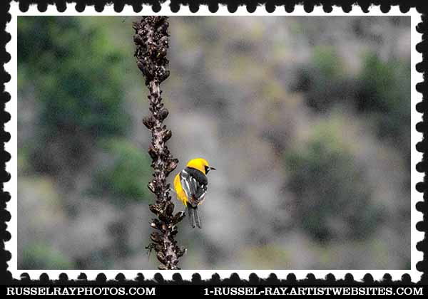 Pretty yellow bird