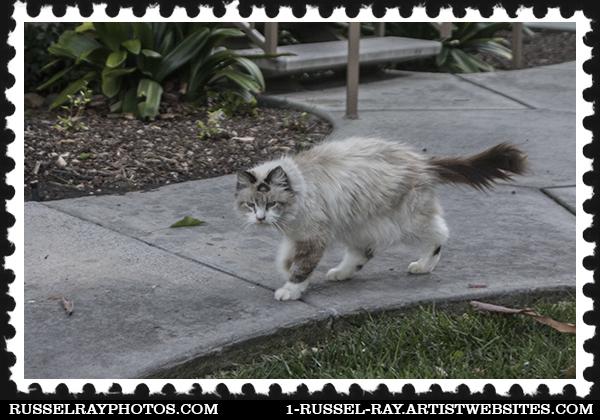 Cat greeter