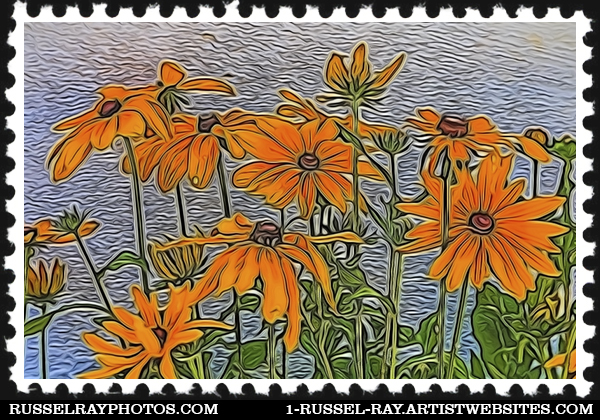 Sunflower daisy