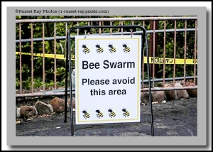 Bee swarm: Please avoid this area