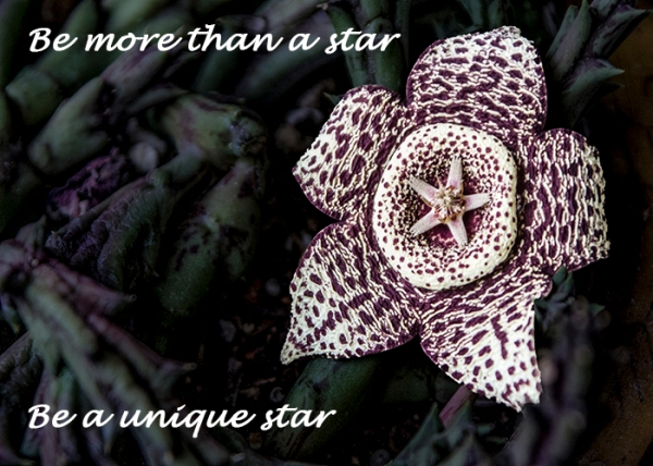 Be a unique star