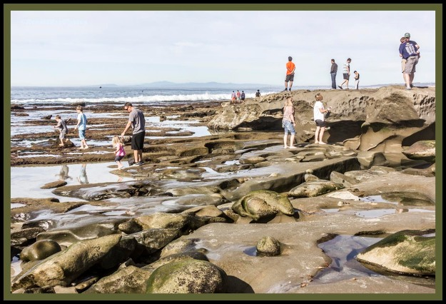 Tide pools in La Jolla CA