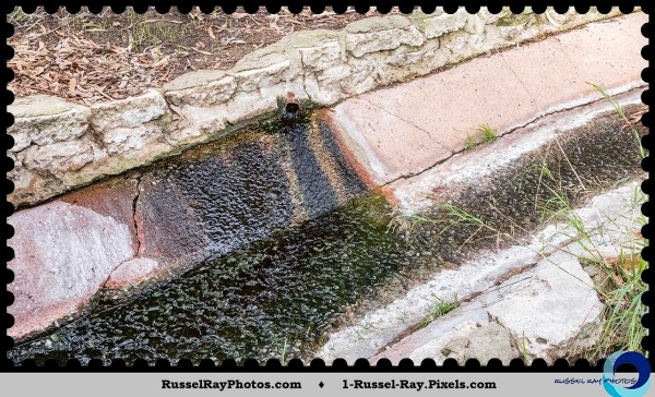 Natural spring drainage in Collier Park, La Mesa, California