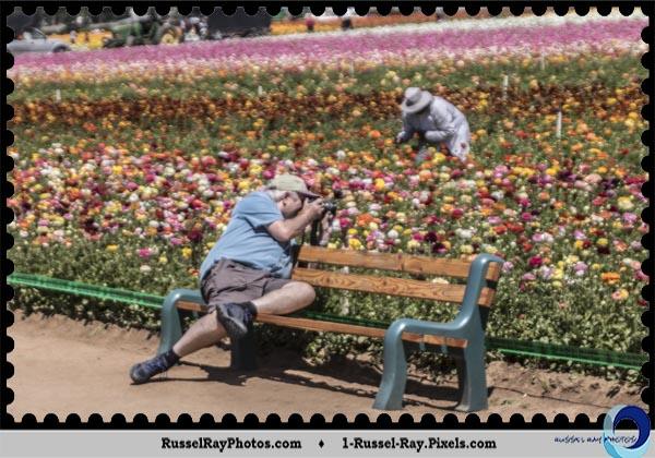 Bryan Flint at the Carlsbad Flower Fields