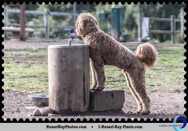 Dog waiting at the water fountain