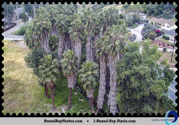 Palm trees from above