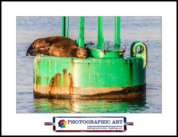 Sea lion on buoy