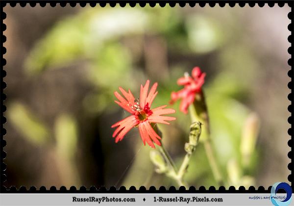 Tiny flowers at Ramona Grasslands, Ramona, California