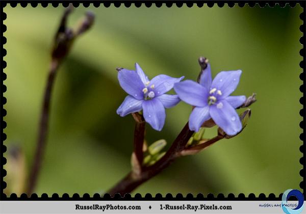 Tiny flowers at San Diego Zoo Safari Park, Escondido, California