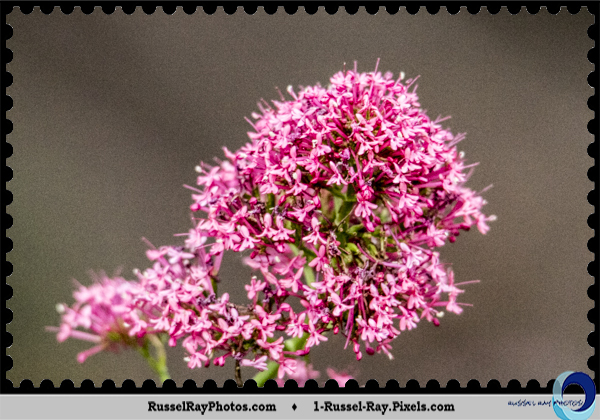 Tiny flowers at San Diego Zoo, San Diego, California