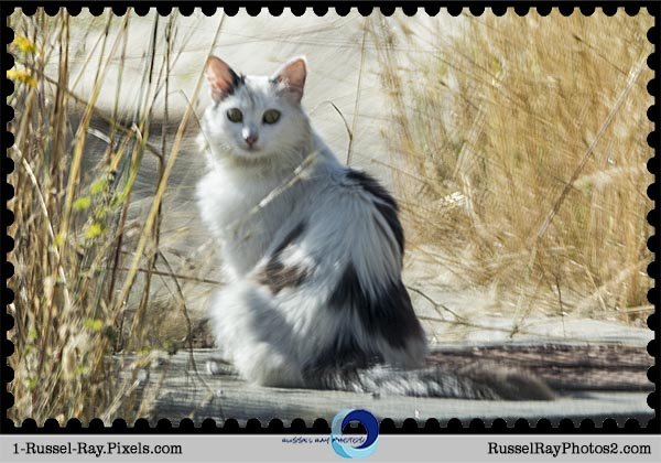 Feral cat, Tijuana estuary, San Diego CA