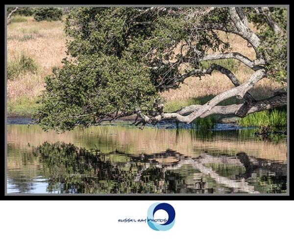 Relaxing pond and tree, Ramona Grasslands