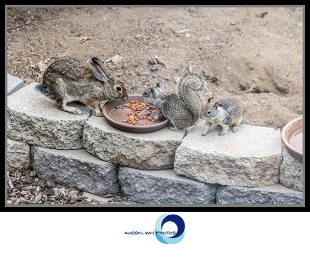 Rabbit and squirrels