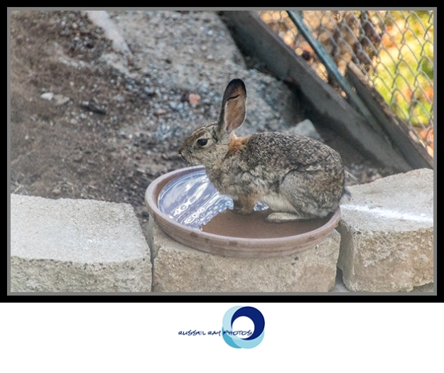 Rabbit bath