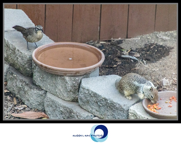 Unknown bird and squirrel