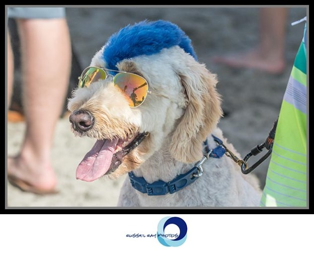 12th Annual Surf Dog Surf-a-thon at Dog Beach in Del Mar, California