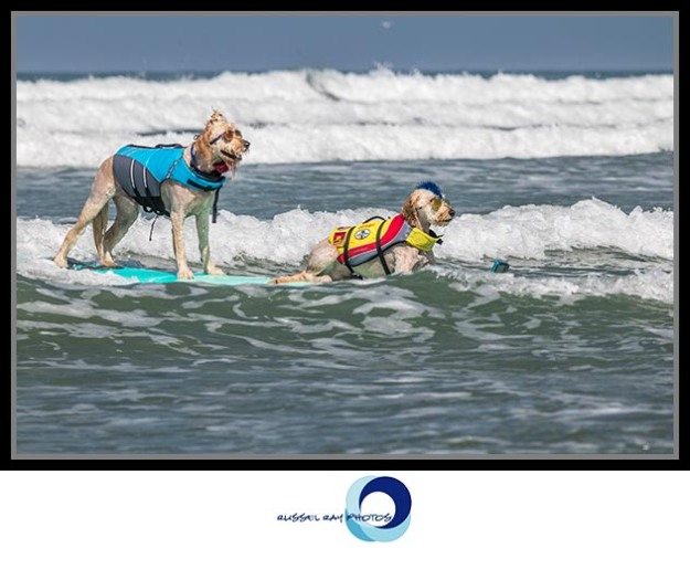 Surf Dog Surf-a-thon at Dog Beach in Del Mar
