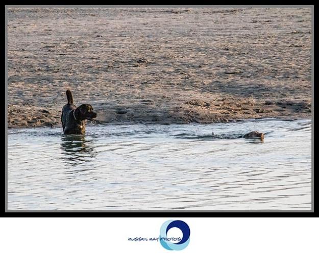 Dogs on Dog Beach in Ocean Beach across from the San Diego Jetty