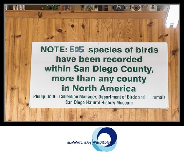 The Birdwatcher in Julian, California