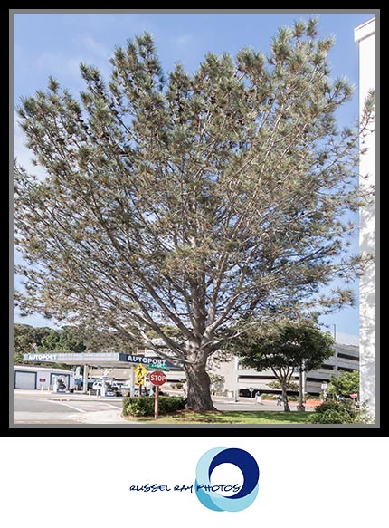 Freedom Tree at Naval Base Point Loma in San Diego