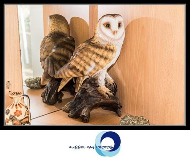 Barn owl from The Birdwatcher in Julian, California
