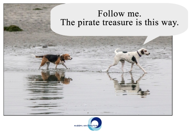 Follow me. The pirate treasure is this way.