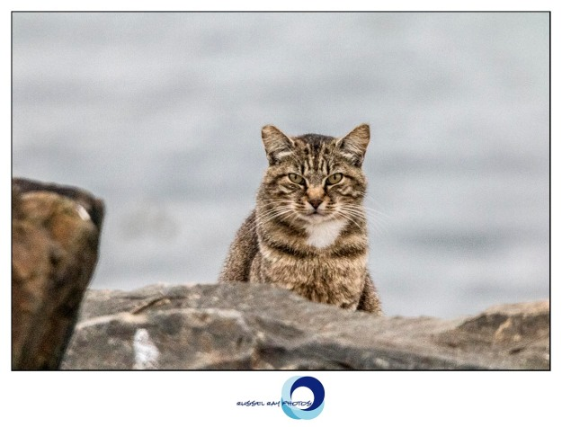 Feral cat with attitude