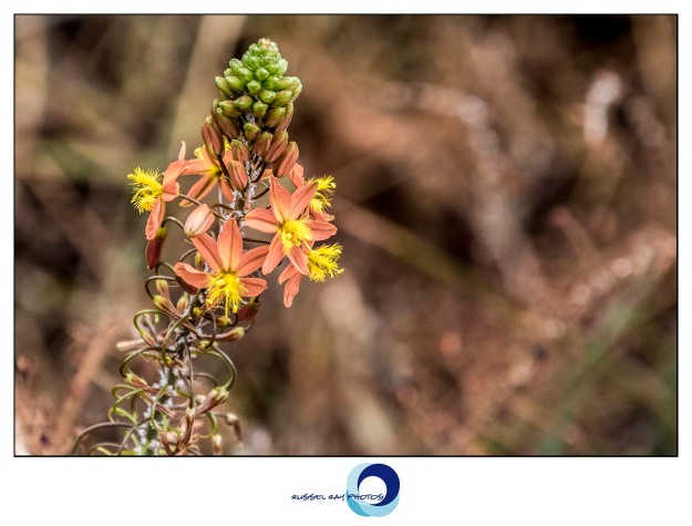 Itsy bitsy teeny tiny little beautiful flowers