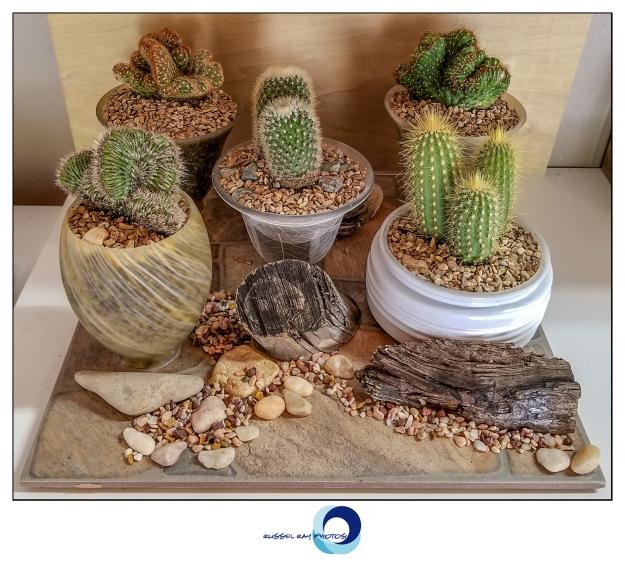 Cactus Condominium Complex
