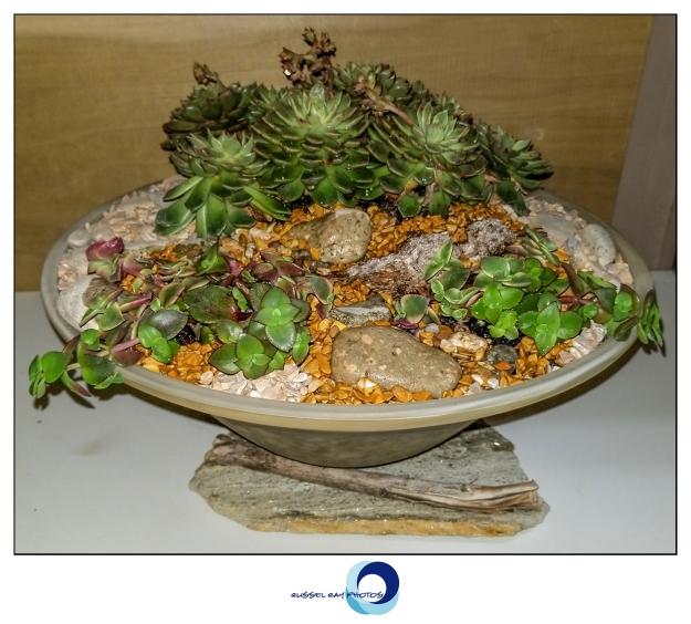 Show pot & plants
