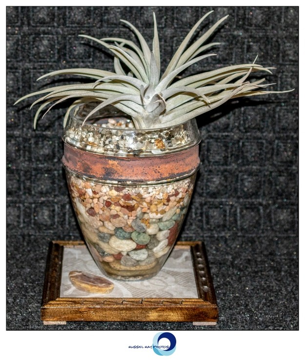 Tillandsia in Designer Pot #59 by A+R POTTERY