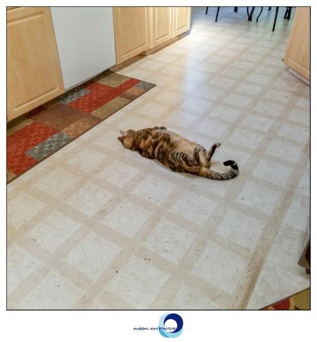 Floor spot