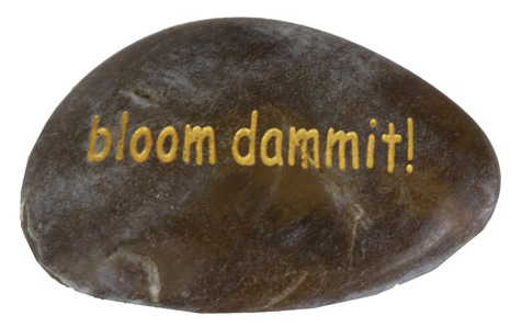 Bloom dammit!