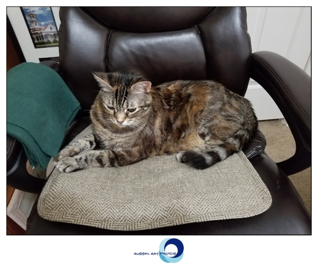 Zoey the Cool Cat in my office chair