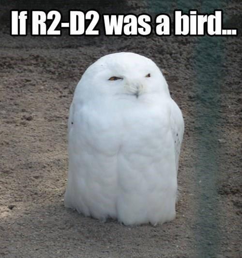 If R2-D2 was a bird