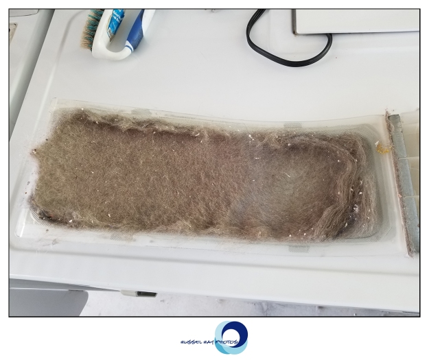 Dryer lint screen