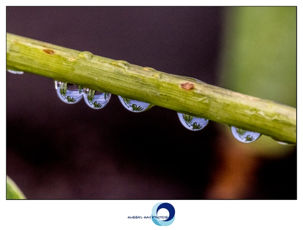 Macro of raindrops on plants