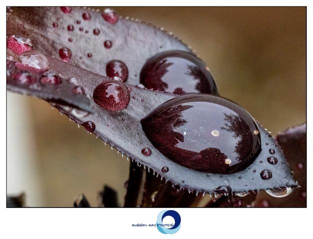 Macro of raindrops on plants