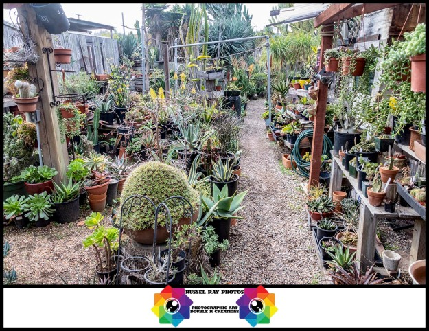 Solana Succulents in Solana Beach, California